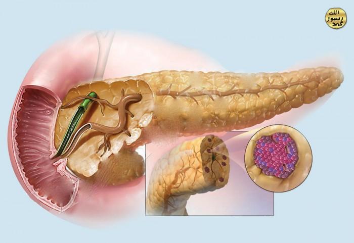 Возможно ли восстановление поджелудочной железы